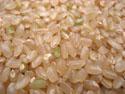 富山県産こしひかり玄米