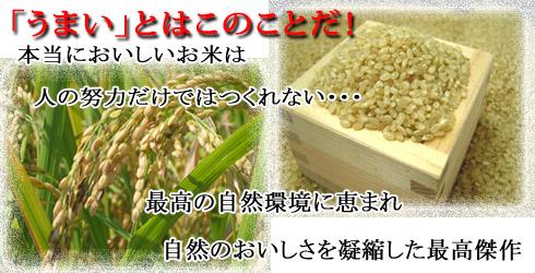 おいしいお米ここにあり